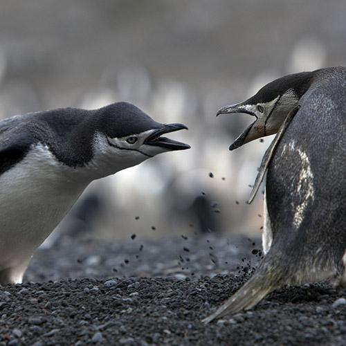 understanding-conflict